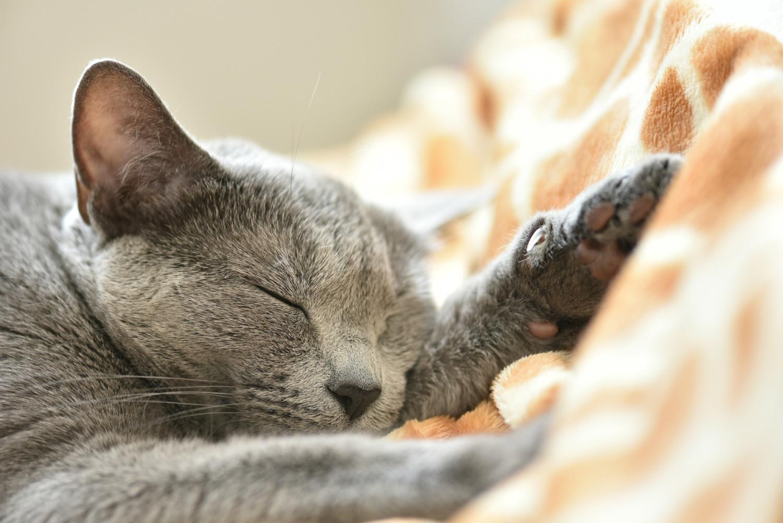 新型コロナで睡眠時間が増加!「スリープテック」市場が過熱、ポケモンも参入するビジネスの今