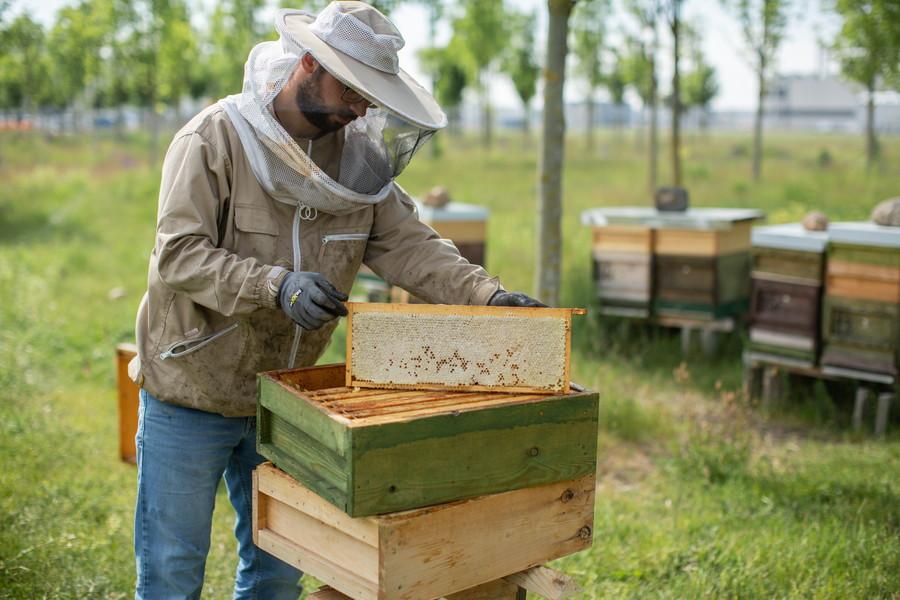 BMWが「ミツバチを飼っている」理由とは? サステイナビリティへの、あくなき追求
