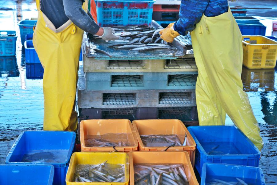 日本の魚は「3分の1」まで減っている…シェフたちの水産資源を守る活動