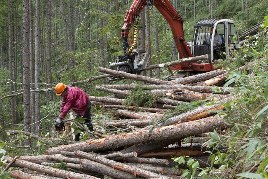 毎週「東京都と同じ面積の森林」が消失している。日本では林業の担い手不足が問題に