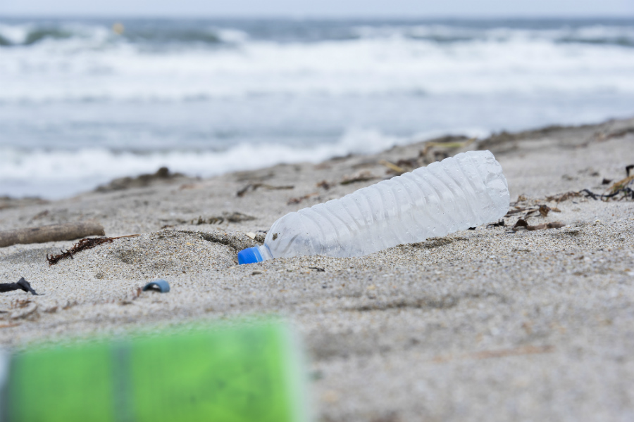 日本周辺の海は「マイクロプラスチック」が世界の30倍。魚を通じて人体への悪影響も
