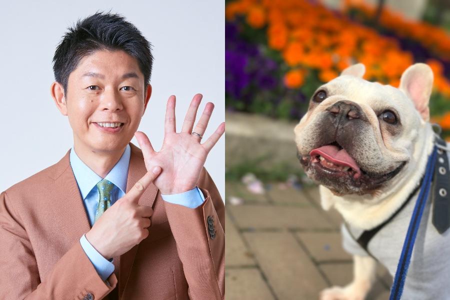 どの犬も「首こり」がある…その理由に島田秀平が思わず涙