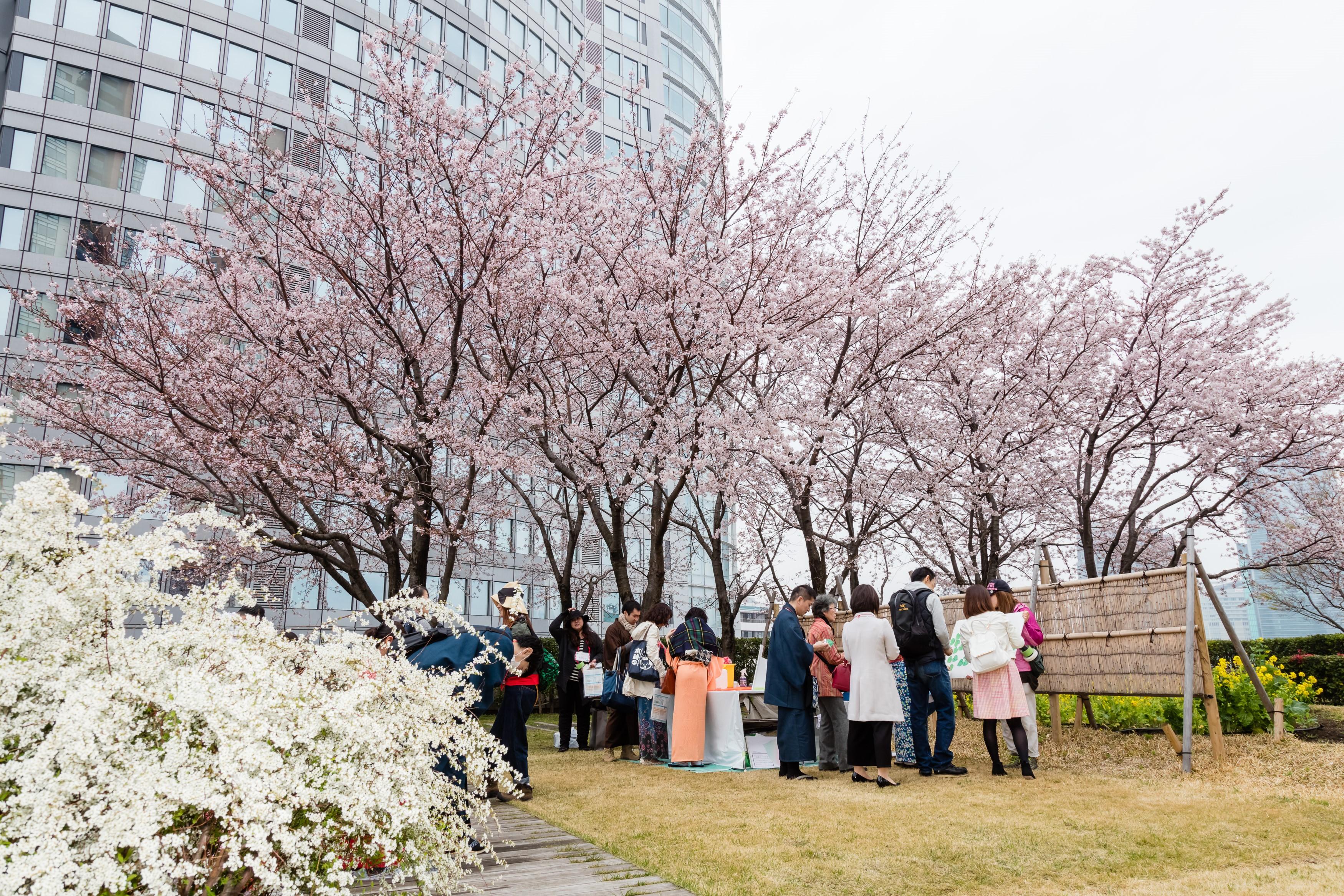 「六本木ヒルズ 春まつり 2019」