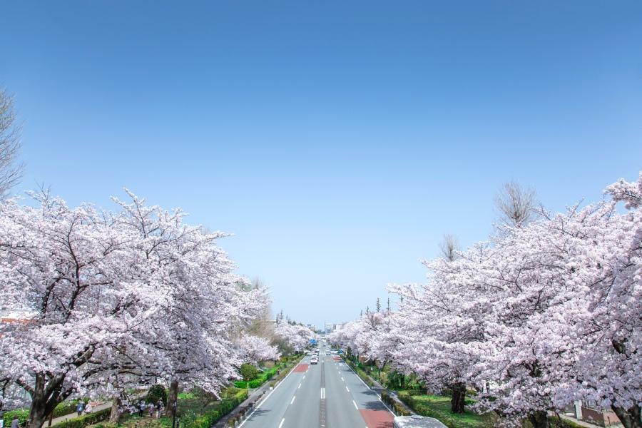sakura-pixta_45544007_M.jpg